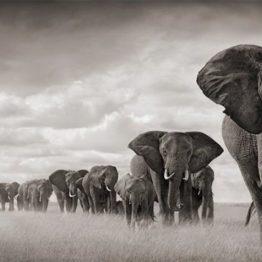 elephants savane